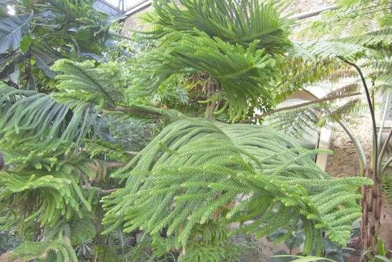 Deux projets calédoniens distingués par  le ministère de la Transition écologique