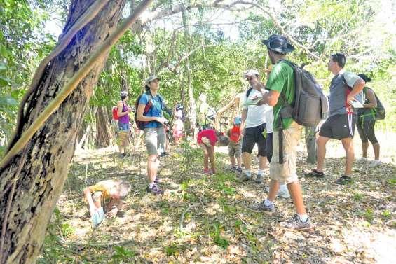 Découvrir la forêt sèche de Pindaï