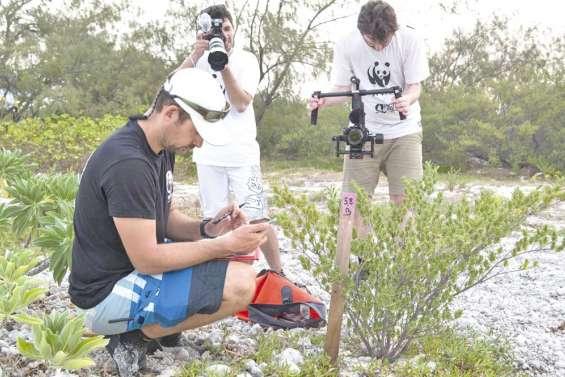 La ponte des tortues en réalité virtuelle grâce au WWF
