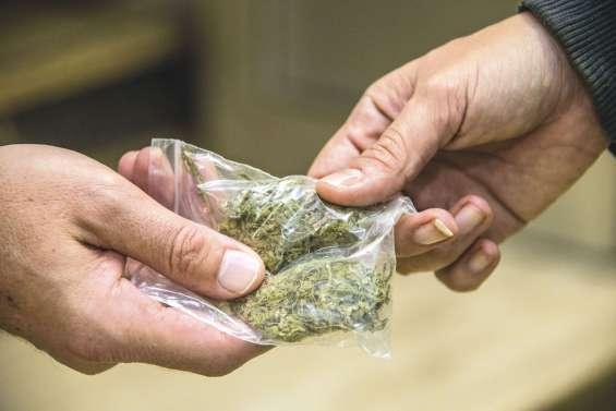 Douze prévenus jugés dans une affaire de stupéfiants