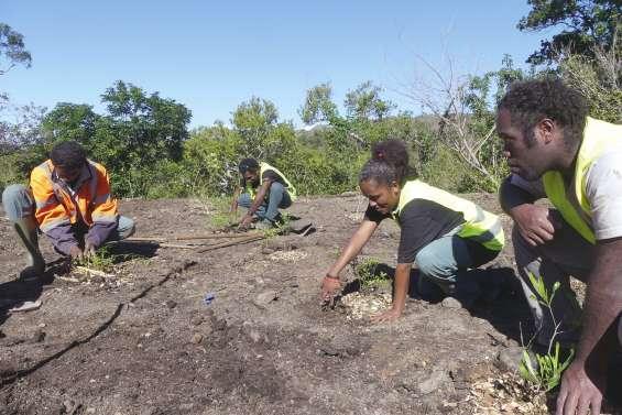 Des jeunes du CAT plantent  des arbres de forêt sèche