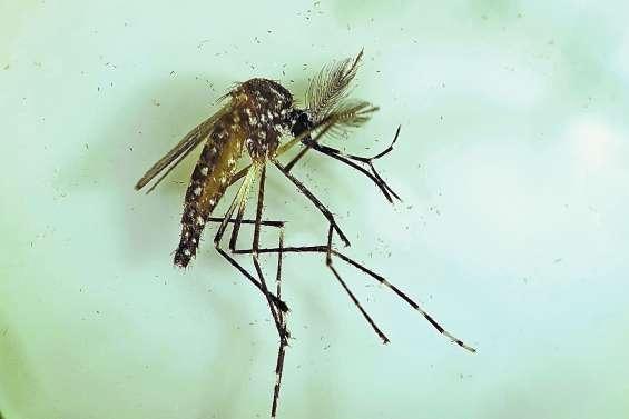 Un test prometteur pour combattre la dengue