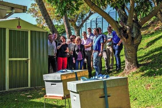 Un potager et des ruches dans les jardins d'EEC