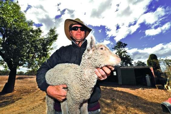 Les éleveurs australiens face à la pire sécheresse en plus de cinquante ans