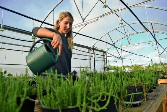 La science cuisine les plantes de bord de mer