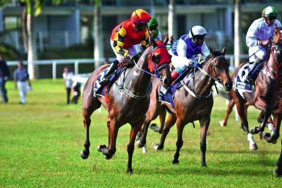 Bataille de montures importées à la Nouméa Cup