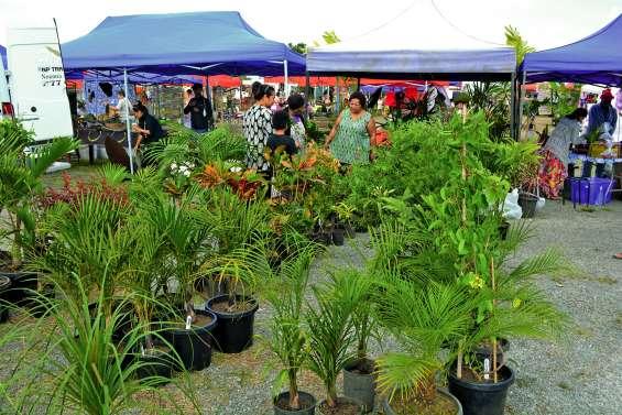 Le palmier sera le roi de la fête dimanche à Moindou