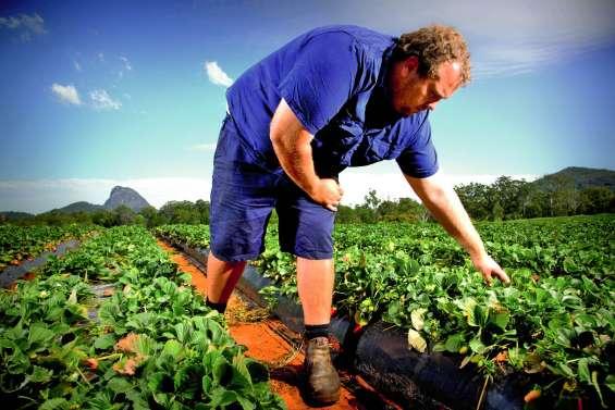 De nouvelles mesures contre la psychose des fraises piégées