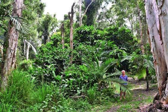 La pépinière Eriaxis : un jardin d'Eden calédonien sur 18 hectares