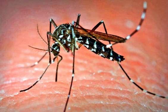 Une méthode efficace contre la dengue