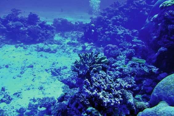 La santé des récifs du Grand lagon Nord passée au crible
