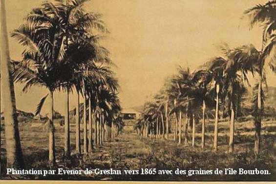 La disparition de dix palmiers patrimoniaux indigne la Toile