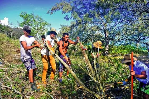 La lutte contre l'érosion des îlots est déclarée