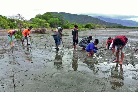Les lycéens à la découverte de la mangrove