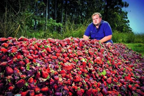 Aiguilles dans les fraises : ça recommence