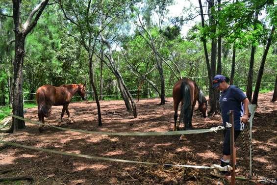 Troisième cambriolage à La Cravache : « Ils se sont attaqués aux chevaux »