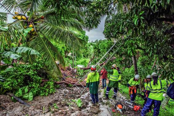 Elagage : pourquoi il ne faut pas attendre le cyclone