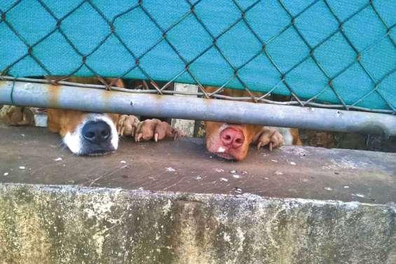 Déposer plainte pour lutter contre les maltraitances animales