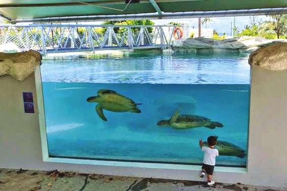L'Aquarium perce le mystère des tortues et dévoile ses coulisses
