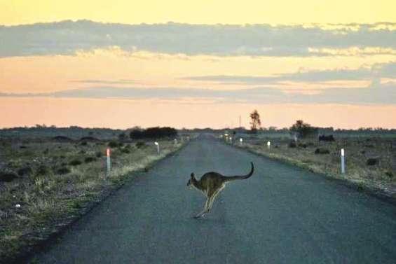La sécheresse décime la faune sauvage