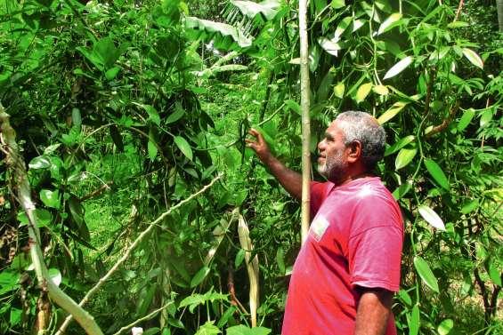 Alfred Kavivioro cultive l'amour de la terre