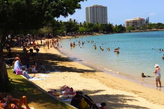 Les méduses bleues se rapprochent des plages de Nouméa