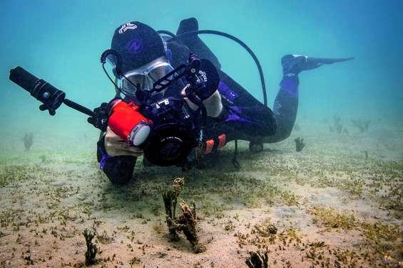 Trois jours pour apprendre à figer le monde sous-marin