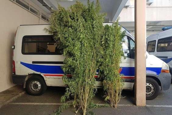 45 kg de cannabis saisis par la police nationale