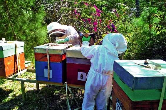 La ville recense les ruches pour leur éviter les épandages contre la dengue