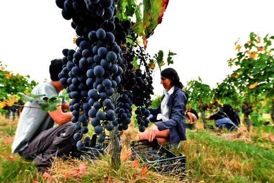 Glyphosate : les vignerons ont avancé « le pistolet dans le dos »