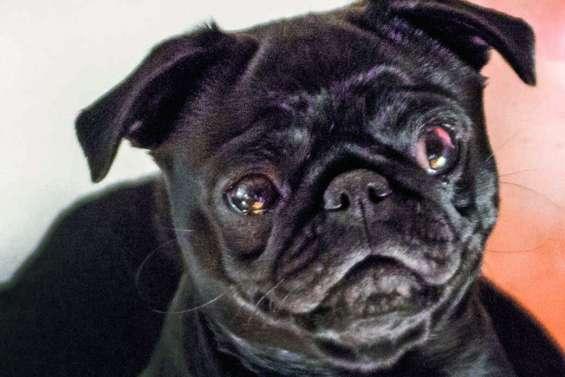 Une chienne saisie et vendue sur eBay