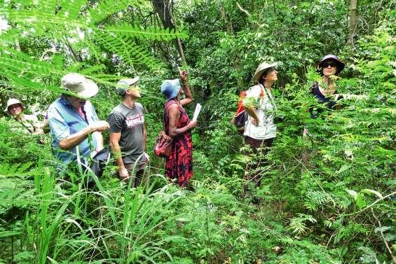 A la chasse aux papillons dans la forêt sèche