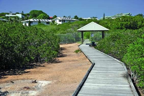 Quel impact pourrait avoir la piste cyclable sur la mangrove de Ouémo ?