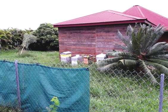 « Les abeilles étaient folles » : ils fuient leur maison à cause de ruches à l'abandon