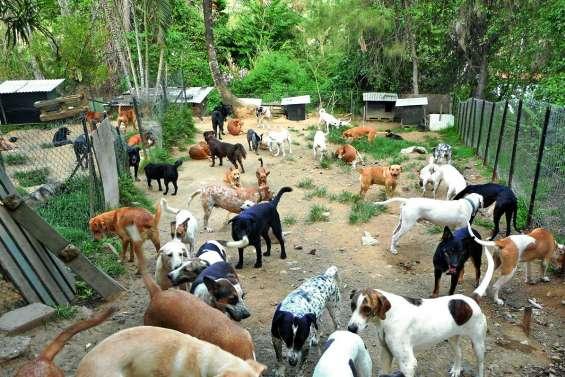 Quelle solution pour la centaine  de chiens accueillis par l'AAAC ?