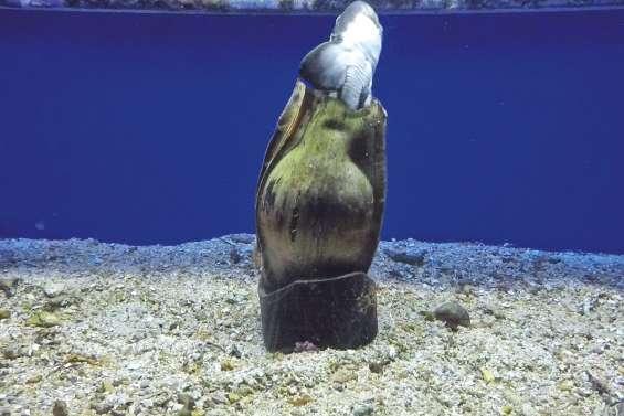 Des petits nouveaux dans les bacs  de l'Aquarium des lagons
