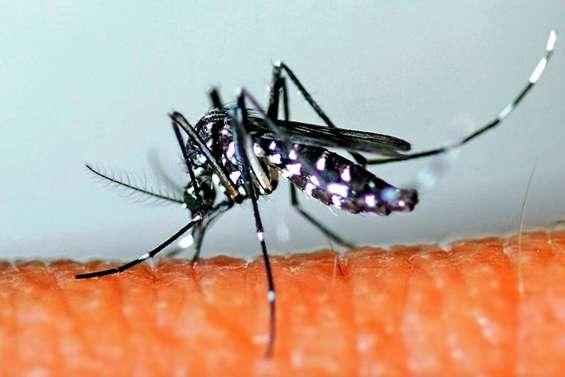 L'épidémie de dengue déclarée à Tahiti