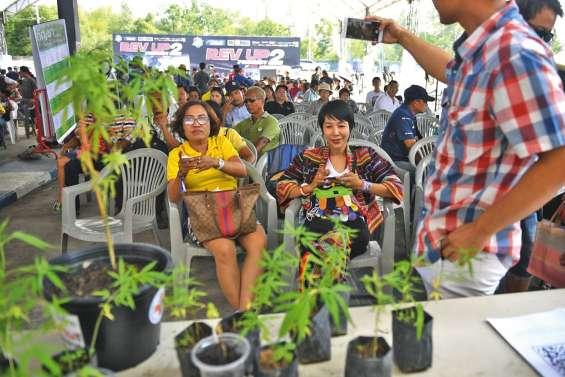 Première fête du cannabis après la légalisation à usage médical au Siam