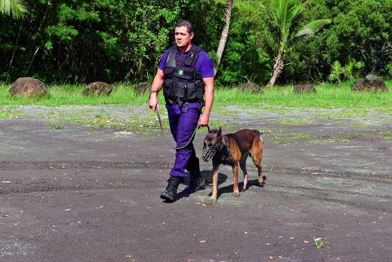 En six mois, l'unité canine de la police municipale s'est fait sa place