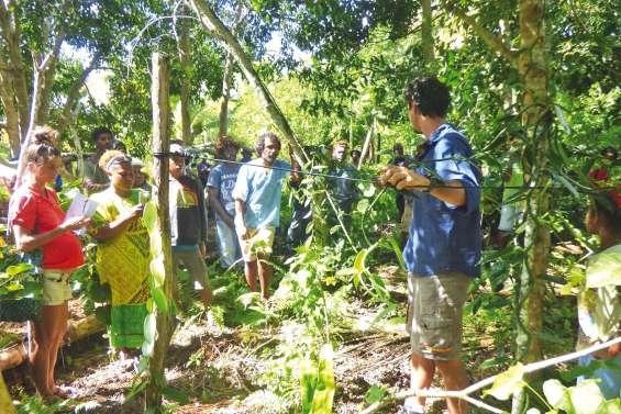 Les planteurs de vanille se penchent sur l'export