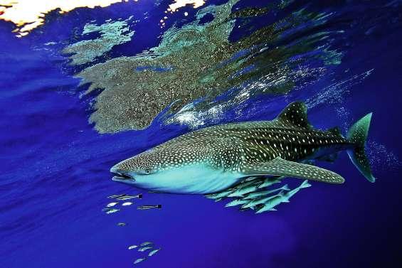 La 10e édition du Festival de l'image sous-marine promet du lourd