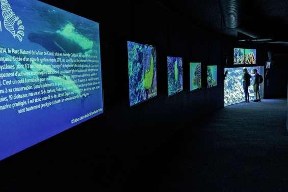 La richesse du Pacifique à l'honneur à l'Aquarium de Paris