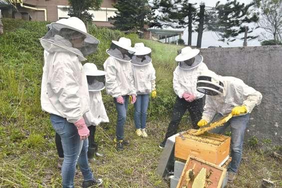 Nouveau concept :  le parrainage de ruches
