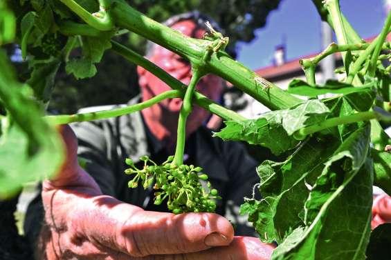 Les récoltes décimées sur des milliers d'hectares