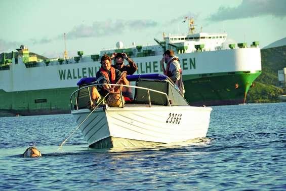 Risque requin :  des associations et des ONG interpellent province Sud et mairie de Nouméa