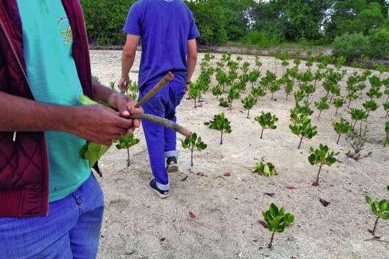 La mangrove de Tina de nouveau prise pour cible