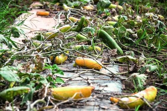 L'indemnisation des calamités agricoles évoluera au 1er janvier 2020