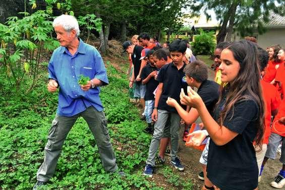Les collégiens découvrent les vertus des plantes sauvages