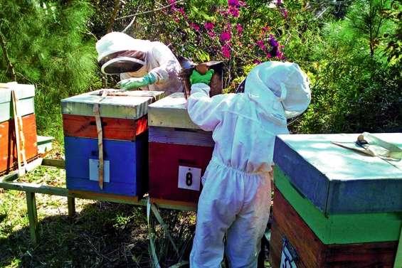 Le Parc forestier organise sa première Fête de l'abeille dimanche