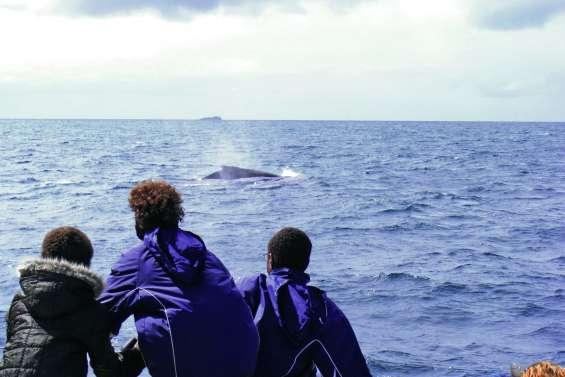 Une formation aux bonnes pratiques d'observation des baleines